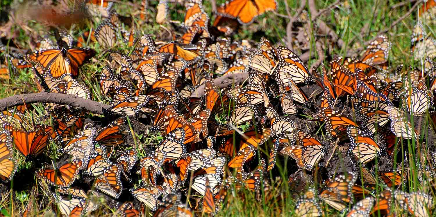 mexico vacation tours mexico guided butterfly monarch migration cultural tours